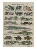 Histoire naturelle (reptiles) Impression giclée