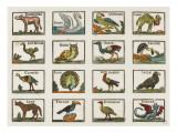 Planche d'animaux Impression giclée