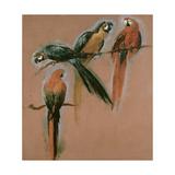 Etude de quatre perroquets Reproduction procédé giclée par Pieter Boel