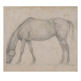 Etude de cheval Giclee Print by Edgar Degas