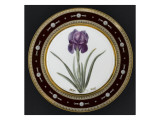 Service to the Empress Josephine Liacées: Iris Susa Reproduction procédé giclée