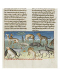 The Book of Gaston Phoebus Hunting: Diseases of Dogs Giclee Print