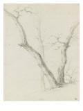 Etude de trois arbres dépouillés de leurs feuilles Giclée-Druck von Pierre Henri de Valenciennes