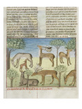 The Book of Gaston Phoebus Hunting: Deer and Nature Giclee Print
