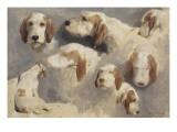 Etude de chien de chasse ; 8 esquisses Giclee Print by Rosa Bonheur
