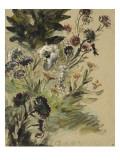 Etudes de fleurs : Soucis, hortensias et reines- marguerites; vers 1840-1850 Reproduction procédé giclée par Eugene Delacroix