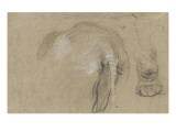 Etudes d'un éléphant, pied et corps vu de dos Giclee Print by Pieter Boel