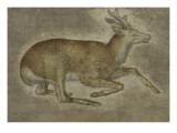 Etude d'un jeune cerf Giclee Print by Jacopo Bellini