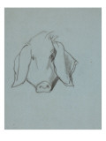 Etude de tête de cochon Giclee Print by Thomas Couture