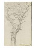 Trunk and Branches of a Tree in the Bois De Boulogne Reproduction procédé giclée par Pierre Henri de Valenciennes