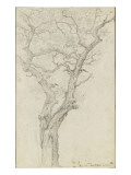 Trunk and Branches of a Tree in the Bois De Boulogne Giclee Print by Pierre Henri de Valenciennes