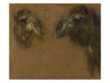 Deux têtes de dromadaires Giclee Print by Pieter Boel