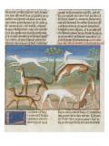 Le Livre de la chasse de Gaston Phébus : le lévrier Reproduction procédé giclée