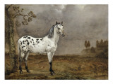 Le Cheval pie Giclee Print by Paulus Potter