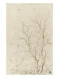 Deux branches d'arbres nues émérgeant d'un feuillage Impression giclée par Pierre Henri de Valenciennes