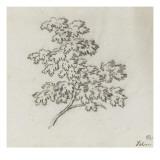 Branche d'arbre avec des feuilles Giclée-Druck von Pierre Henri de Valenciennes
