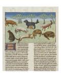 Le Livre de la chasse de Gaston Phébus : le chien d'oysel, chien d'arrêt Giclee Print