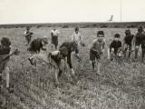 Little Gleaners Photographic Print
