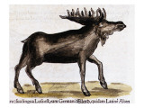 """Gesner, Manuscrit """"Historiae Animalium"""", Book Ii: """"Quadrupedipus Oviparis"""" Giclee Print by Conrad Gesner"""