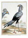 Collection of Rare Animals, Quadrupeds, Birds and Serpents Giclée-Druck von A. Vosmaer