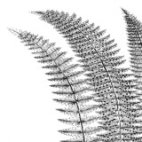 Fern I (on white) Plakat