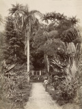 West Indies, Botanical Garden of St. Pierre, in the Martinique Photographic Print
