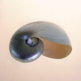 Polished Nautilus Prints by Tom Artin
