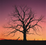 Arboral Afterglow Posters par Leslie Mueller