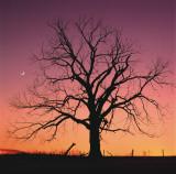 Arboral Afterglow Posters af Leslie Mueller