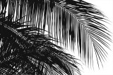 Palms 3 Print by Jamie Kingham