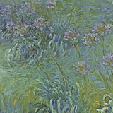 Jewelry Lilies Poster von Claude Monet