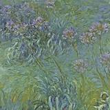 Jewelry Lilies Poster von Claude Monet