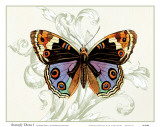 Butterfly Theme I Prints by Susan Davies
