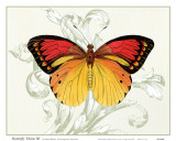 Butterfly Theme III Prints by Susan Davies
