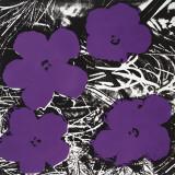 Andy Warhol - Flowers, c.1965 (4 purple) - Poster