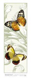 Butterfly Panel I Prints by Susan Davies