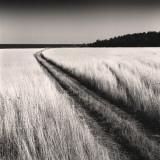 Oceanside Field Reprodukcje autor Andrew Ren