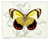 Butterfly Theme II Print by Susan Davies