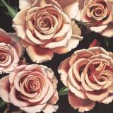 Roses Art by Elizabeth Hellman