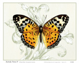 Butterfly Theme IV Posters by Susan Davies