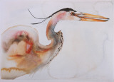 Great Blue Heron Prints by Carol Grigg