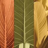 Tropical Trio I Posters af John Seba