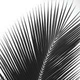 Palms 14 (detail) Art par Jamie Kingham