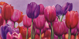 Campo di Tulipani Poster par Sara J. Cortesse