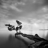 Drzewo w wodzie Plakat autor Moises Levy