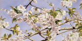 Apple Blossoms Prints by John William Hill
