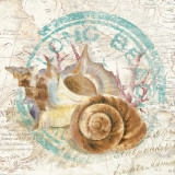 Seashells by the Seashore I Posters par David Fischer