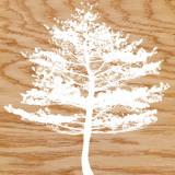Frosty Tree Print by Erin Clark