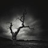 The Last Tree Plakat af Marcin Stawiarz