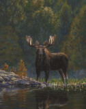 Bruce Miller - North Country Moose - Poster